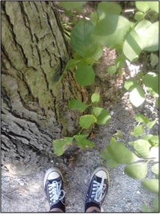 introduction-shoes-and-tree